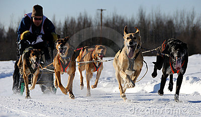Limited North American Sled Dog Race Editorial Photo