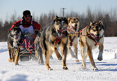 Limited North American Sled Dog Race Editorial Stock Image