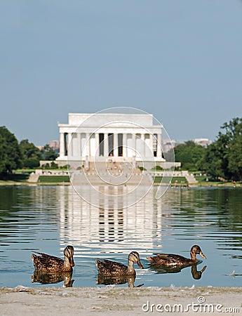 Lincoln Memorial Ducks