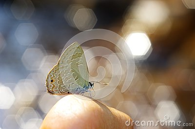 Line-blue Butterfly and bokeh