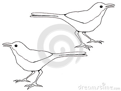 Line Drawing of Birds, Thrasher Stock Photo