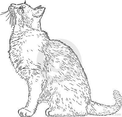 Free Line Drawing Cat Royalty Free Stock Photo - 18561275