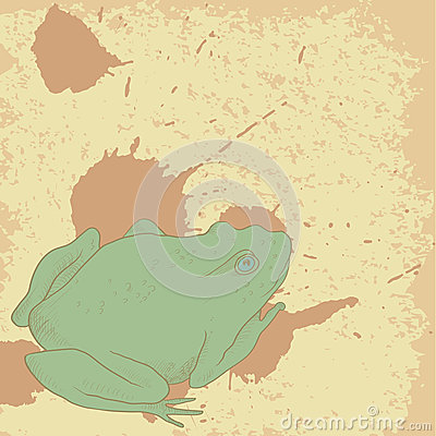Line drawing frog on vintage background with spots
