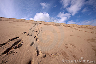 Line of footprints up a desert hill