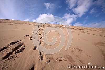 Line of footprints up a desert hill
