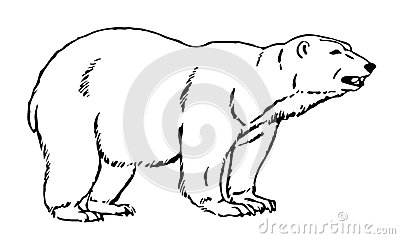 Line Illustration Of An Artic Bear