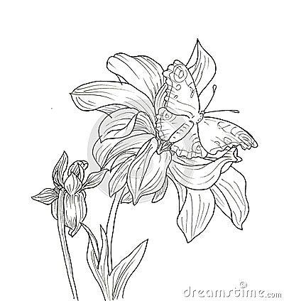 Line Ink Drawing Of Dahlia Flower Stock Illustration ...