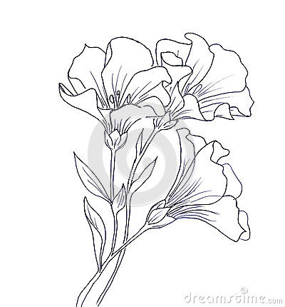 ... drawing of flower with butterfly. Black contour on white background