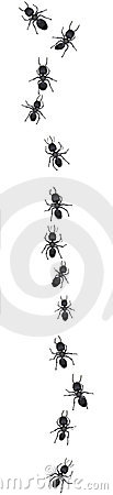 Free Line Of Ants On White Stock Images - 7134304