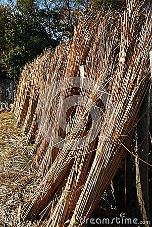 A Line of Reeds