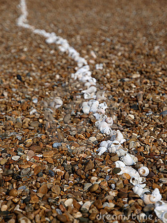 Line of white shells on beach