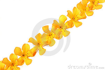 Line of yellow flowers