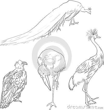 Linear drawing birds