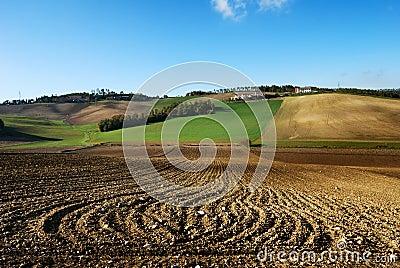Lines in plowed fields