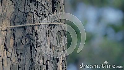 Linha cinzenta em um tronco de árvore, decoração do ofício da árvore, ferida da linha em uma árvore de bordo vídeos de arquivo