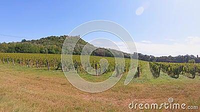 Linhas de uva de vinha situadas abaixo do castelo de Szigliget, na Hungria filme