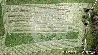 Linje för jord` s Ett vertikalt perspektiv för surr av jord`en s färgar och formar Jordbruks- snitt för gräsfält lager videofilmer