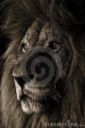 Free Lion Stock Photography - 410232