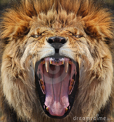 Free Lion Royalty Free Stock Photo - 4872975