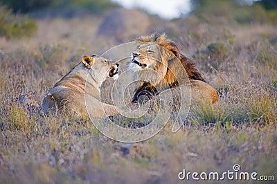 Lion Argument