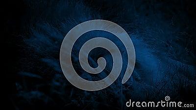 Lion Asleep In Long Grass bij Nacht stock video