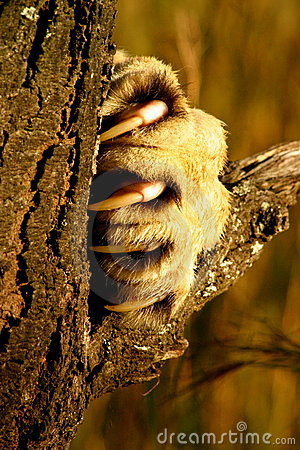 Lion Claw Stock Images - Image: 5190364