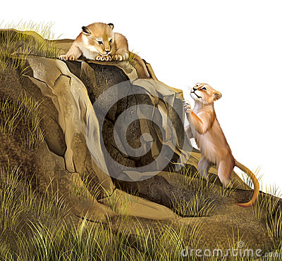 Free Lion Cubs Playing On The Rocks. Lion Cave. Royalty Free Stock Photography - 29742187
