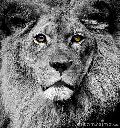 Free Lion Eyes Royalty Free Stock Image - 13981046