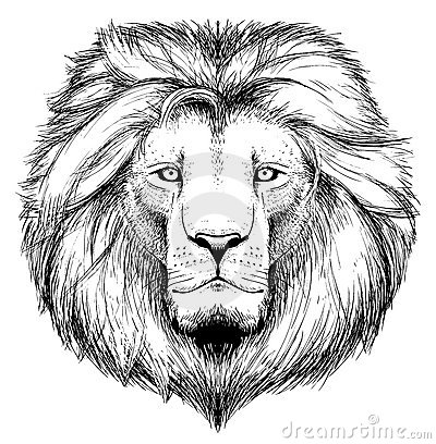 Free Lion Head Stock Photo - 21172580