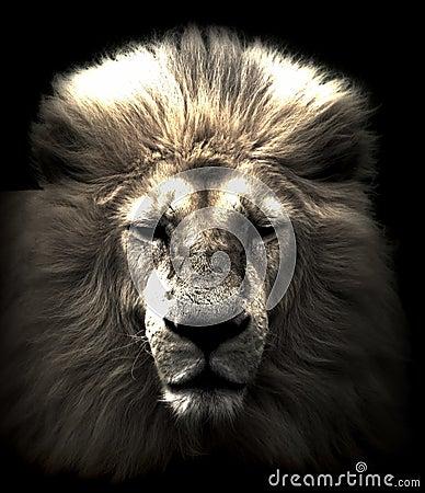 Free Lion Head Stock Photos - 47479373