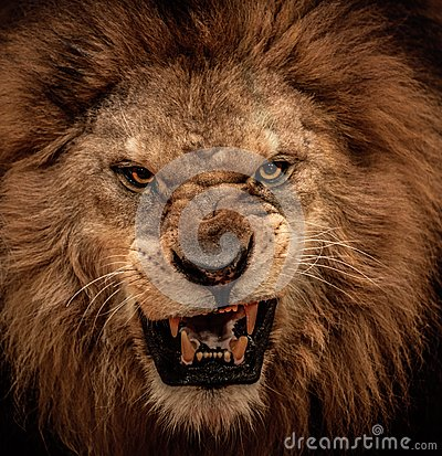 Free Lion In Circus Royalty Free Stock Photography - 32089447