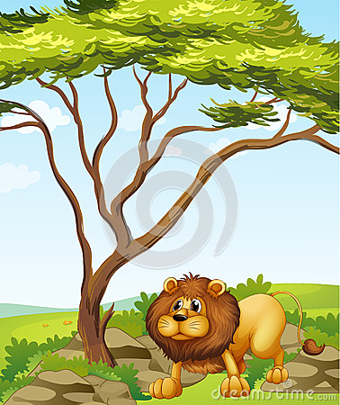A lion near a big tree in the hills
