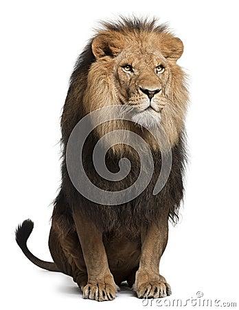Free Lion, Panthera Leo, 8 Years Old, Sitting Stock Photos - 22173813