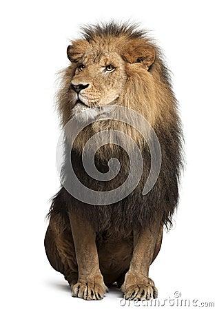 Free Lion, Panthera Leo, 8 Years Old, Sitting Royalty Free Stock Photos - 22173818
