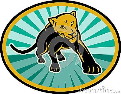 Lion puma cat cougar crawling
