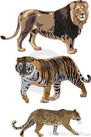 Lion, tiger, leopard