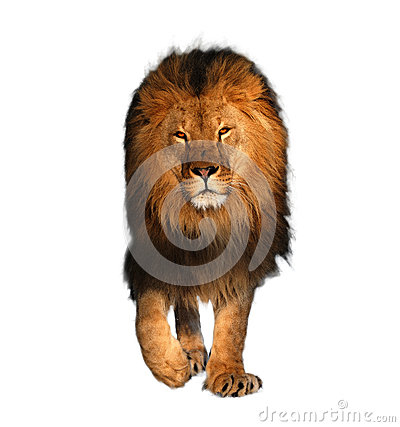 Free Lion Walking Isolated On White King Of Animals Royalty Free Stock Image - 84623376