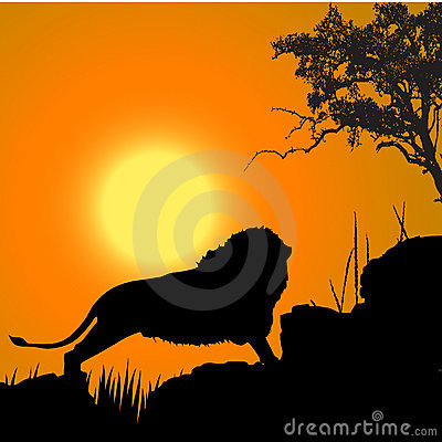 Lion, wildlife