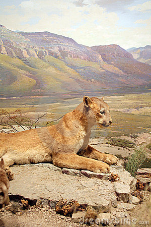 Lionberg