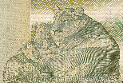 Lioness Lying with two Cubs