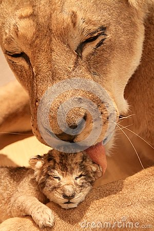 Free Lioness With Her Baby Royalty Free Stock Images - 112122059