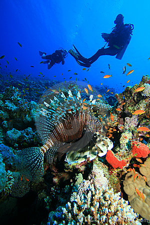 Free Lionfish And Scuba Divers Stock Photo - 15073090