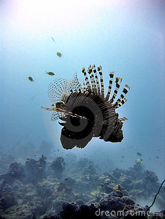 Lionfish Silhouette