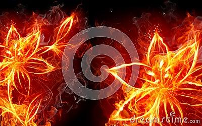 Lirio del fuego