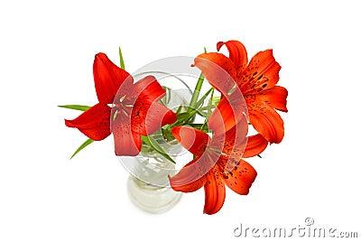 Lirios rojos (pensylvanicum del Lilium)