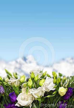 Lisianthus flowers in mountains