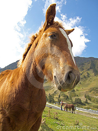 The listening horse at Pyrenees