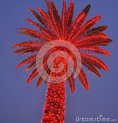 Lit Up Palm Tree