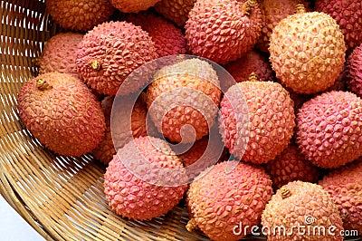 Litchi lichee lychee - Litchi chinensis