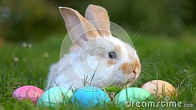 Liten kanin som sitter på gräset nära påskäggen, festligt symbol